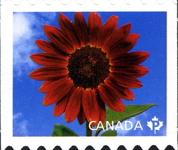 Prado Red - Sunflower Canada Postage Stamp | Sunflowers
