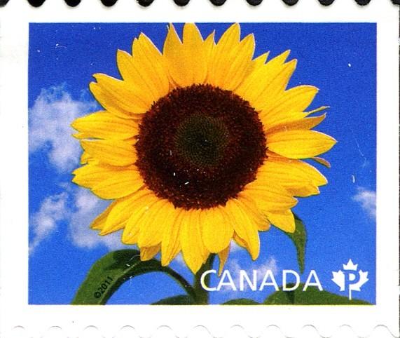 Sunbright - Sunflower Canada Postage Stamp | Sunflowers
