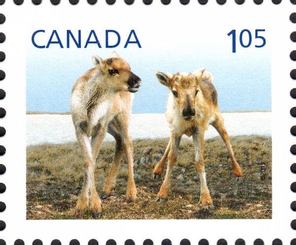Caribou - Baby Wildlife  Canada Postage Stamp | Baby Wildlife - Definitives