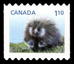 Porcupine - Baby Wildlife Canada Postage Stamp | Baby Wildlife - Definitives