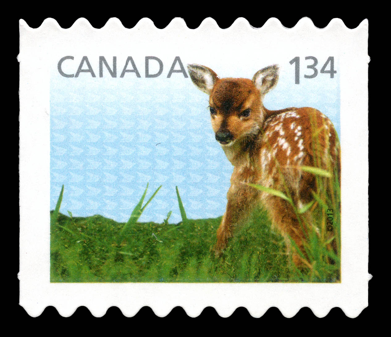 White-Tailed Deer - Baby Wildlife Canada Postage Stamp | Baby Wildlife - Definitives