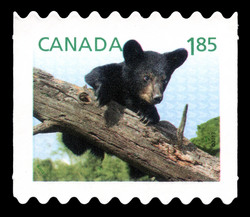 Black Bear - Baby Wildlife Canada Postage Stamp | Baby Wildlife - Definitives