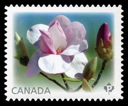 Eskimo Magnolias Canada Postage Stamp | Magnolias