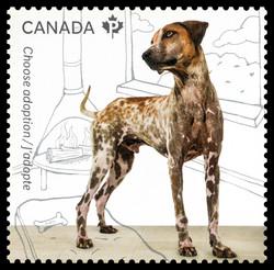 Adopt a Dog Canada Postage Stamp | Adopt a Pet
