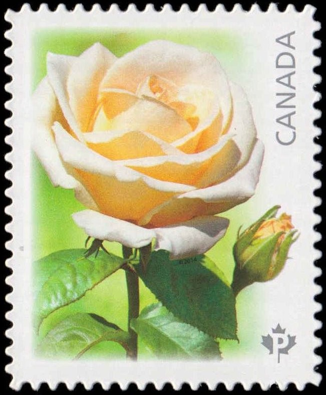 Maid of Honour - White Rose Canada Postage Stamp | Roses