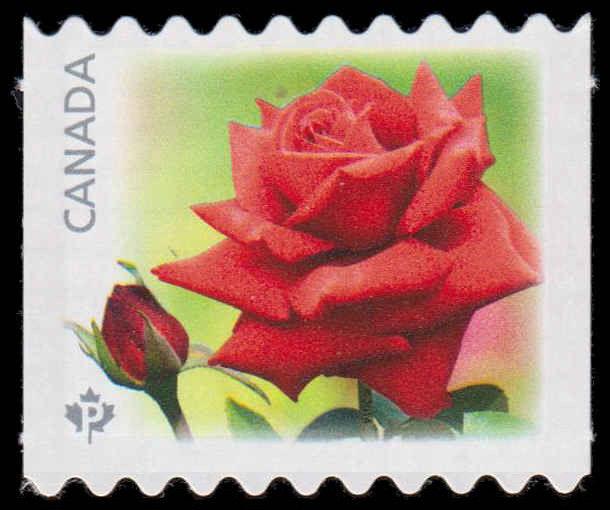 Konrad Henkel - Red Rose Canada Postage Stamp | Roses