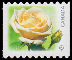 Maid of Honour - White Rose Canada Postage Stamp   Roses