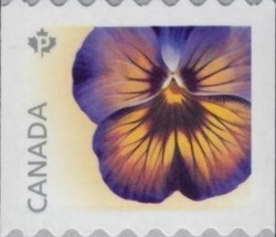 Midnight Glow Pansy Canada Postage Stamp | Pansies