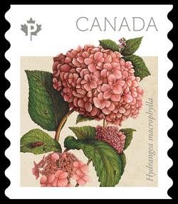 Endless Summer Hydrangea - Hydrangea Macrophylla Canada Postage Stamp | Hydrangeas