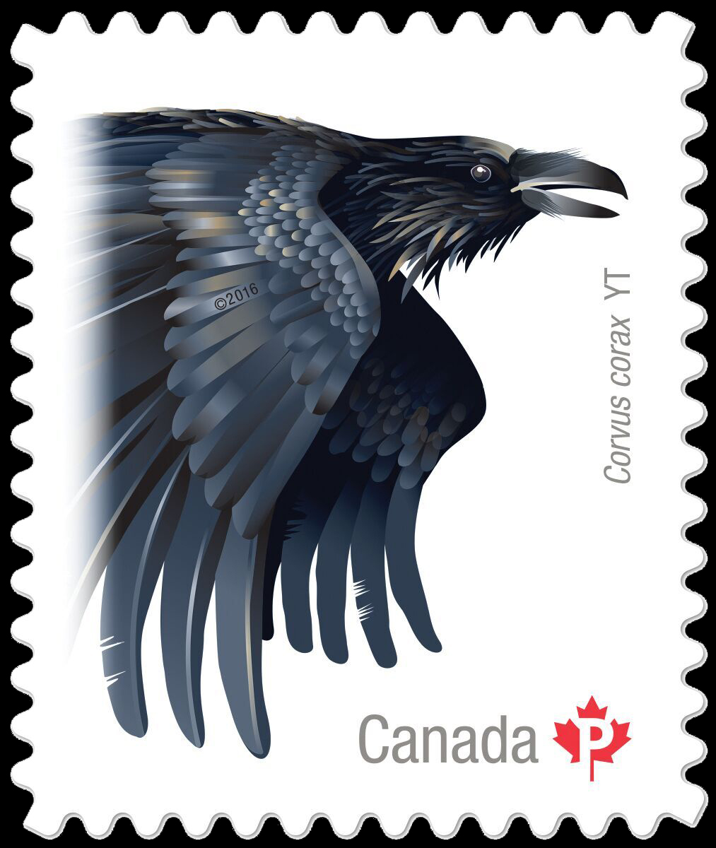 Common Raven (Corvus Corax) Yukon Canada Postage Stamp | Birds of Canada