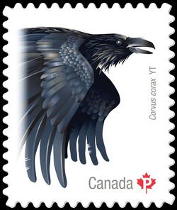 Common Raven (Corvus Corax) Yukon Canada Postage Stamp | Birds of Canada