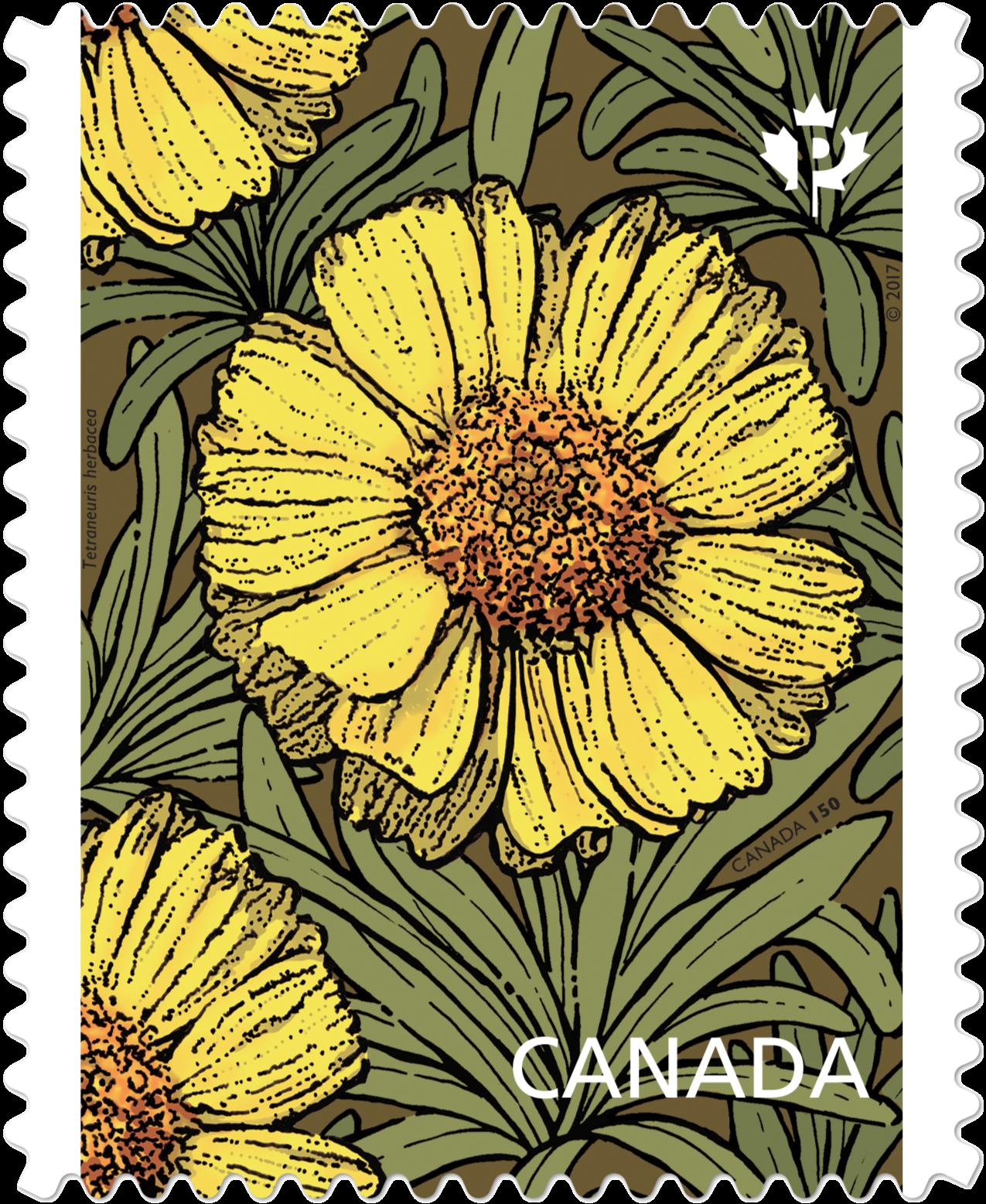 Lakeside Daisy - Tetraneuris Herbacea Canada Postage Stamp | Daisies