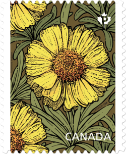 Lakeside Daisy - Tetraneuris Herbacea Canada Postage Stamp | Daisies