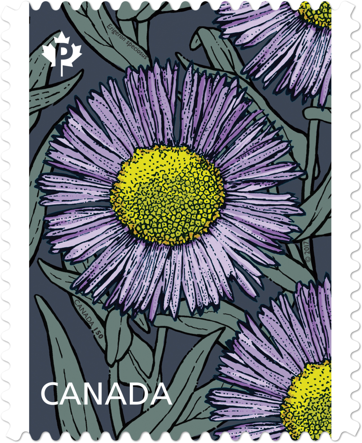 Fleabane Daisy - Erigeron Speciosus Canada Postage Stamp | Daisies