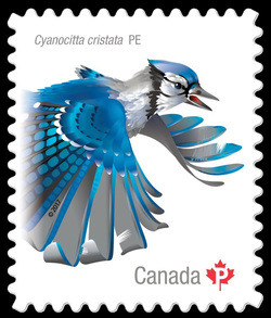 Blue Jay - Cyanocitta Cristata Canada Postage Stamp | Birds of Canada