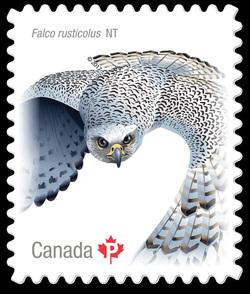 Gyrfalcon - Falco Rusticolus Canada Postage Stamp | Birds of Canada
