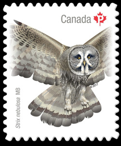 Great Gray Owl - Strix Nebulosa Canada Postage Stamp | Birds of Canada