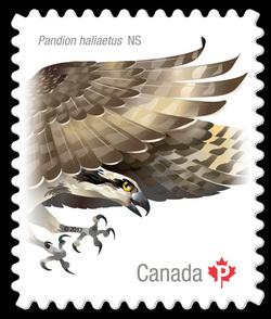 Osprey - Pandion Haliaetus Canada Postage Stamp | Birds of Canada