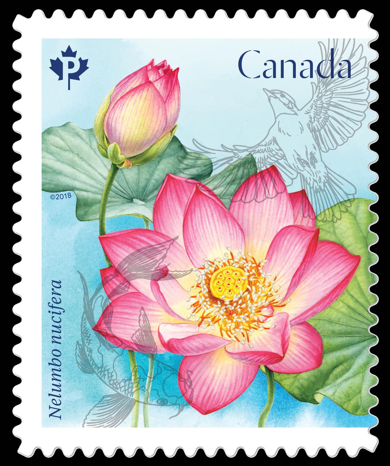 Sacred Lotus   Nelumbo Nucifera Canada Postage Stamp   Lotus Flowers