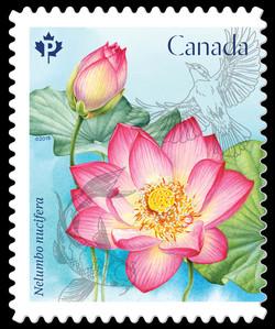Sacred Lotus - Nelumbo Nucifera Canada Postage Stamp | Lotus Flowers
