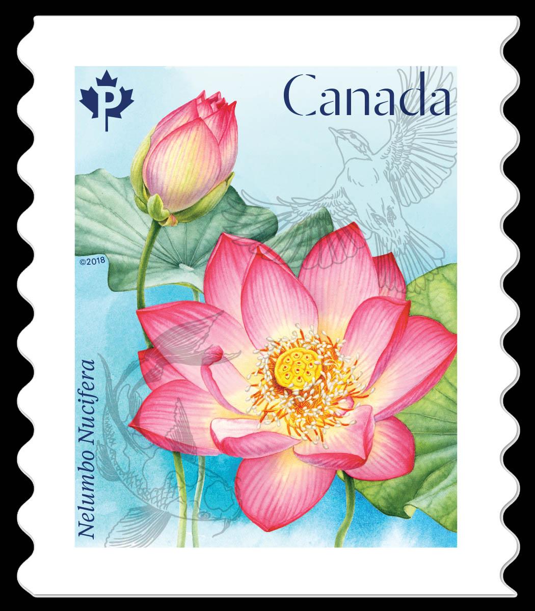 Sacred lotus nelumbo nucifera canada postage stamp lotus flowers sacred lotus nelumbo nucifera canada postage stamp lotus flowers izmirmasajfo