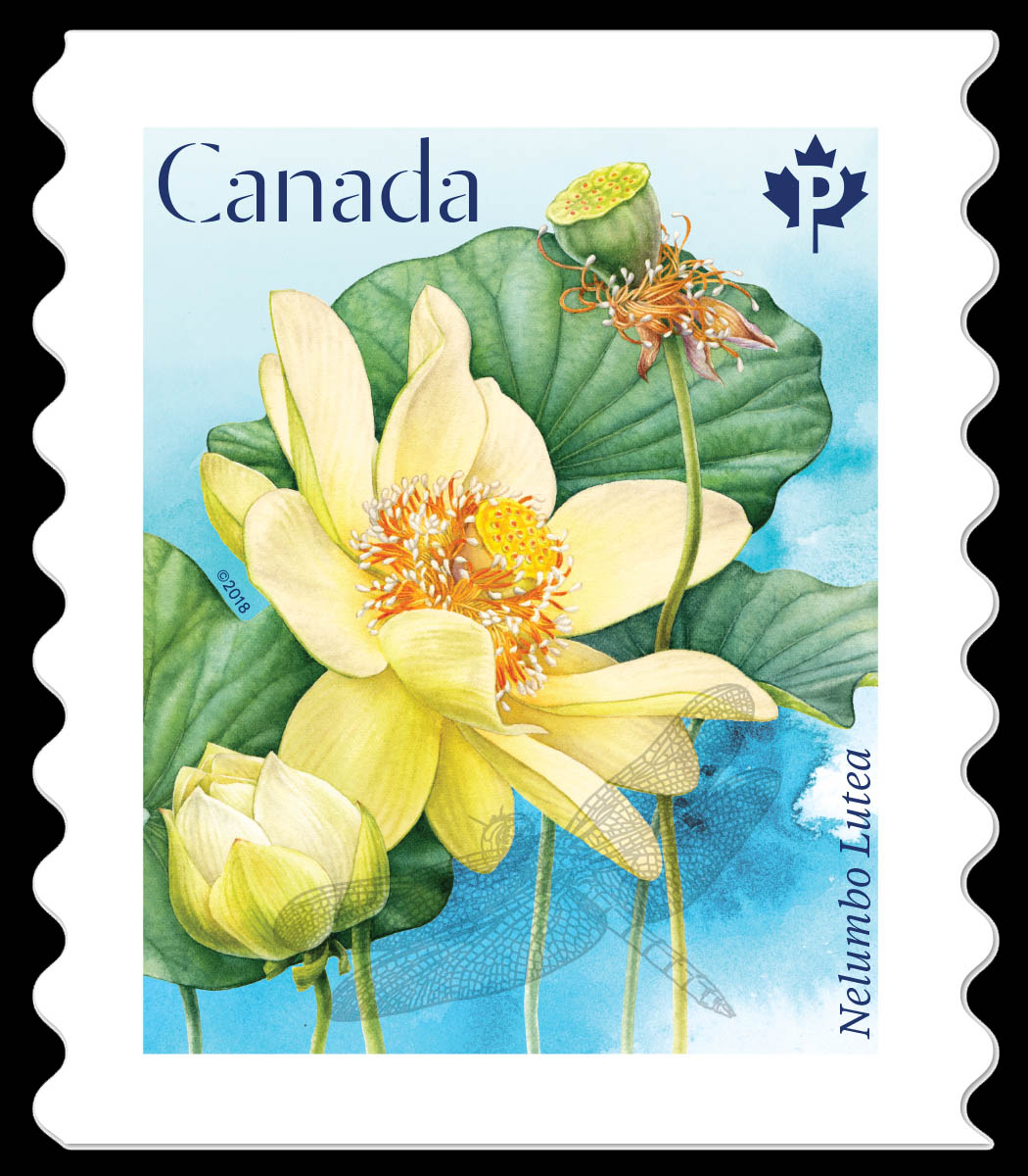 American lotus nelumbo lutea canada postage stamp lotus flowers american lotus nelumbo lutea canada postage stamp lotus flowers mightylinksfo