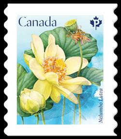 American Lotus - Nelumbo Lutea Canada Postage Stamp | Lotus Flowers