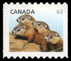 Woodchucks - Baby Wildlife Canada Postage Stamp | Baby Wildlife - Definitives