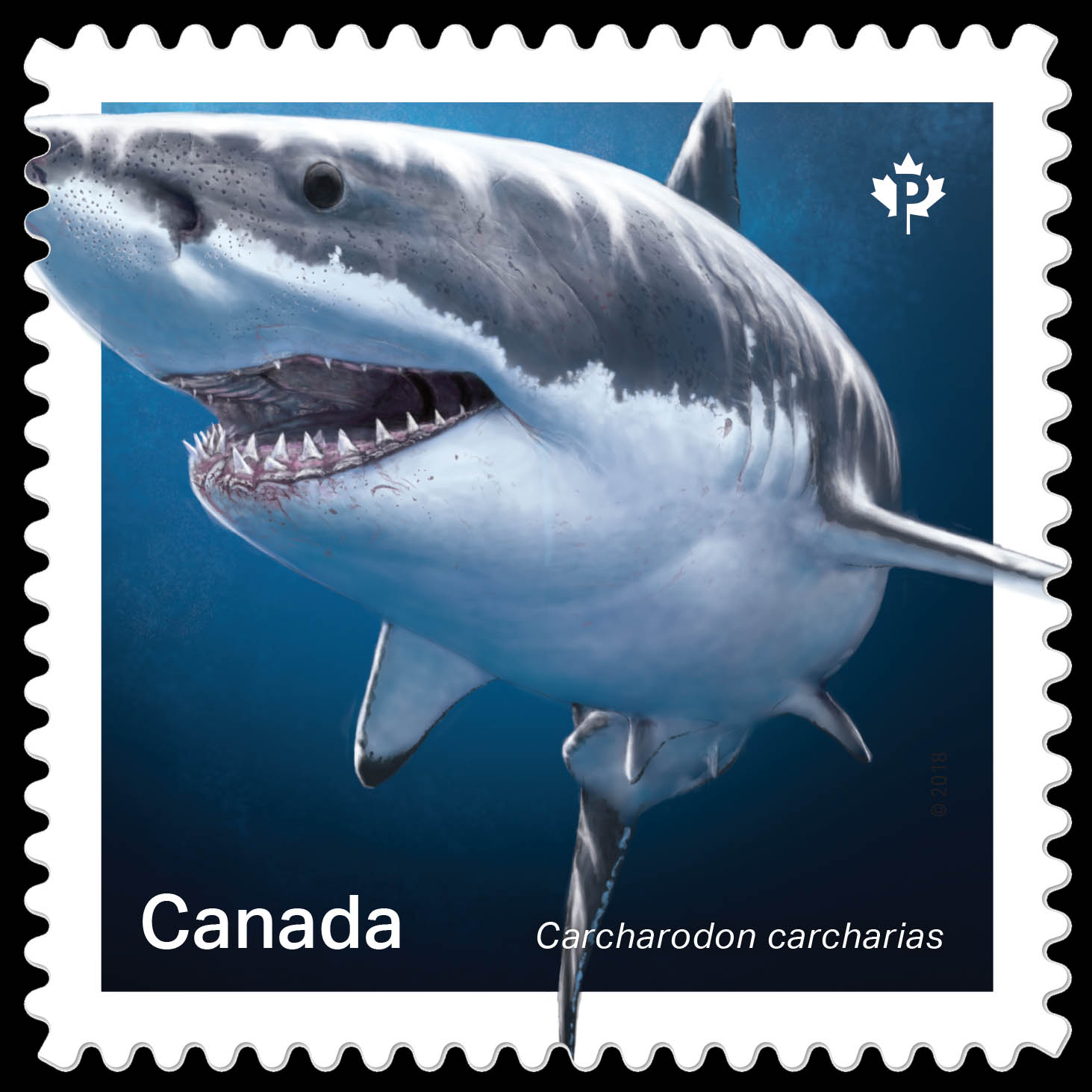 Great White Shark- Carcharodon Carcharias Canada Postage Stamp   Sharks