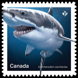 Great White Shark - Carcharodon Carcharias Canada Postage Stamp | Sharks