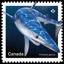 Blue Shark - Prionace Glauca Canada Postage Stamp | Sharks