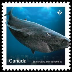 Greenland Shark -Somniosus Microcephalus Canada Postage Stamp | Sharks