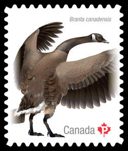 Canada Goose Canada Postage Stamp | Birds of Canada
