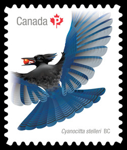 Steller's Jay Canada Postage Stamp | Birds of Canada