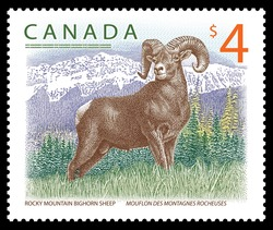 Rocky Mountain Bighorn Sheep Canada Postage Stamp