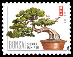 Sierra Juniper Bonsai United States Postage Stamp | Bonsai Trees