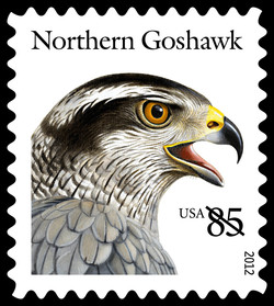 Northern Goshawk United States Postage Stamp | Birds of Prey