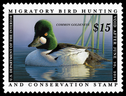 Common Goldeneye United States Postage Stamp | Federal Duck Stamp