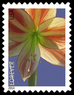 Amaryllis - Hippeastrum United States Postage Stamp | Winter Flowers
