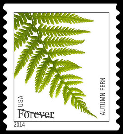Autumn Fern United States Postage Stamp | Ferns