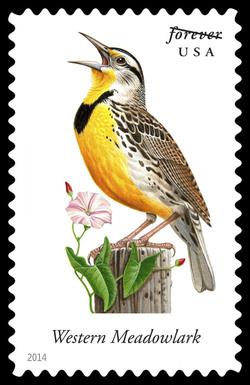 Western Meadowlark - Sturnella Neglecta United States Postage Stamp | Songbirds