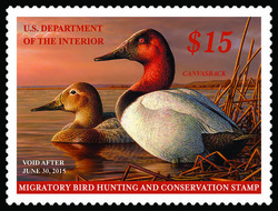 Canvasback Duck United States Postage Stamp | Federal Duck Stamp