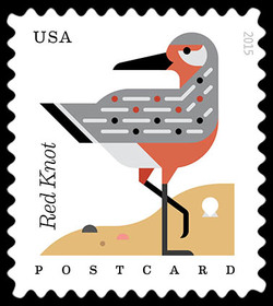 Red Knot - Calidris Canutus United States Postage Stamp | Coastal Birds