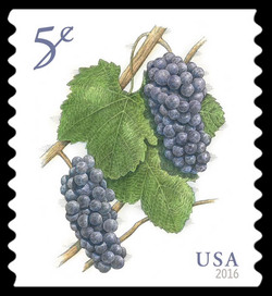 Pinot Noir Grapes United States Postage Stamp