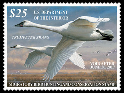 Trumpeter Swans United States Postage Stamp | Federal Duck Stamp
