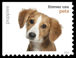 Puppies United States Postage Stamp | Pets