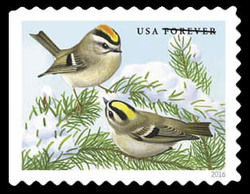 Golden-crowned Kinglet United States Postage Stamp | Songbirds in Snow