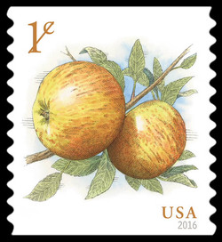 Albemarle (Newtown) Pippin Apple United States Postage Stamp
