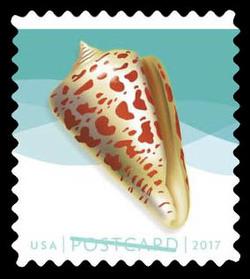 Alphabet Cone United States Postage Stamp | Seashells