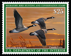 Canada Geese - Migratory Bird Hunting and Conservation United States Postage Stamp | Federal Duck Stamp